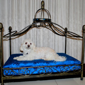 King dog bed